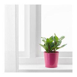 Розовое кашпо для растений Икеа в наличии