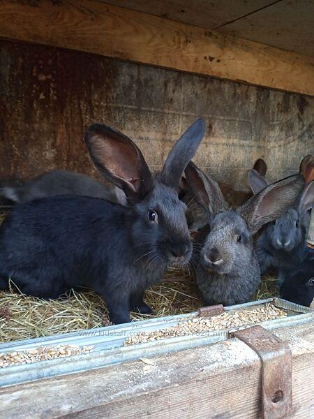 Продаем кроликов на развод и не только