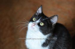 Черно-белый котик Борис в добрые ручки