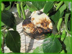 Лечебно- профилактическое мыло Березкины слёзки