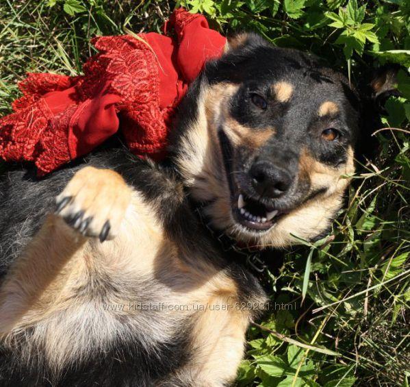 Макбет  молодая жизнерадостная собачка ищет заботливую семью.