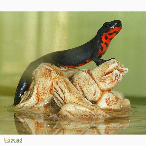 Краснобрюхий тритон  забавное, чудесное, маленькое животное