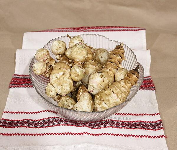 Топинамбур земляная груша Отборной мытый  крупный для еды