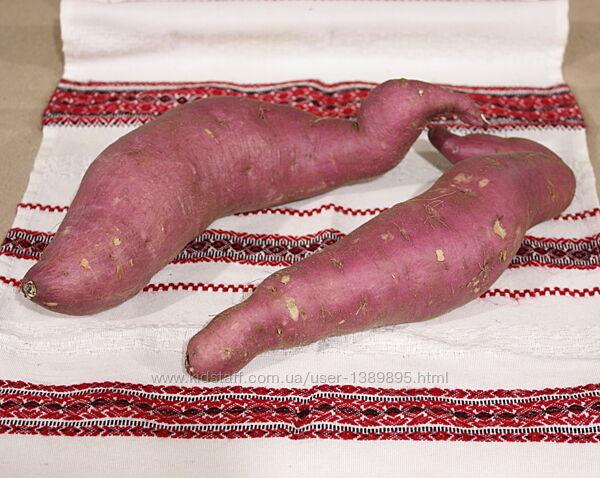 Батат для еды - сорт Винницкий розовый