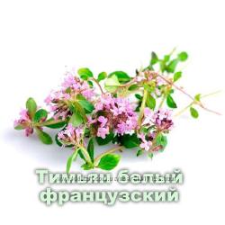 Эфирное масло тимьяна белого -при различных простудных заболеваниях