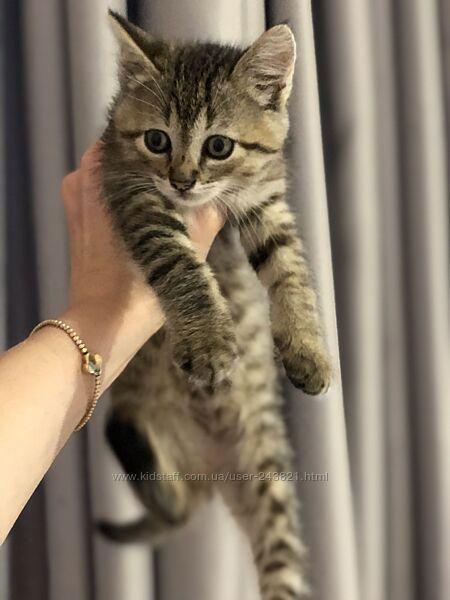 Котик серый полосатый